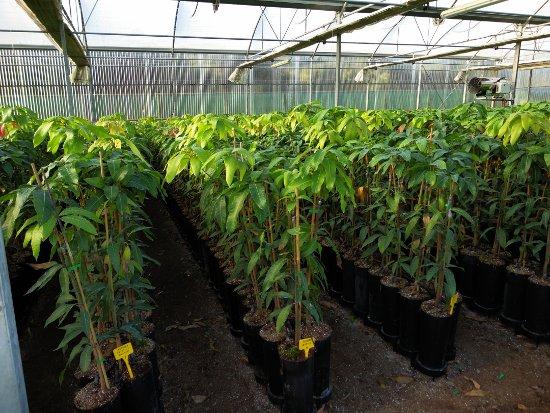 caracter sticas de las plantas viveros blanco